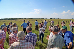 walesi-agrarcsoport